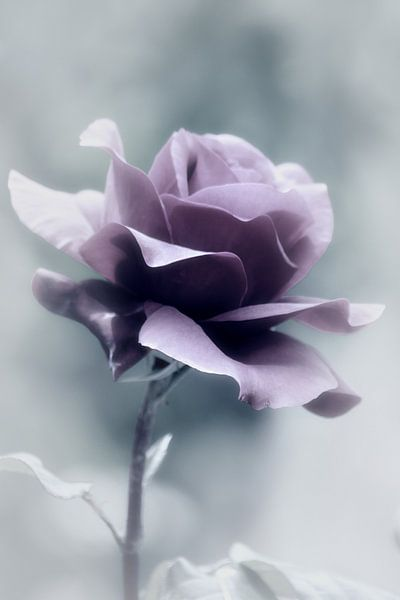 een roos.... van Yvonne Blokland