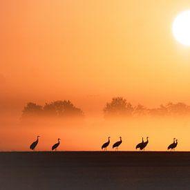 Kranen bij zonsopgang van Tanja Riedel
