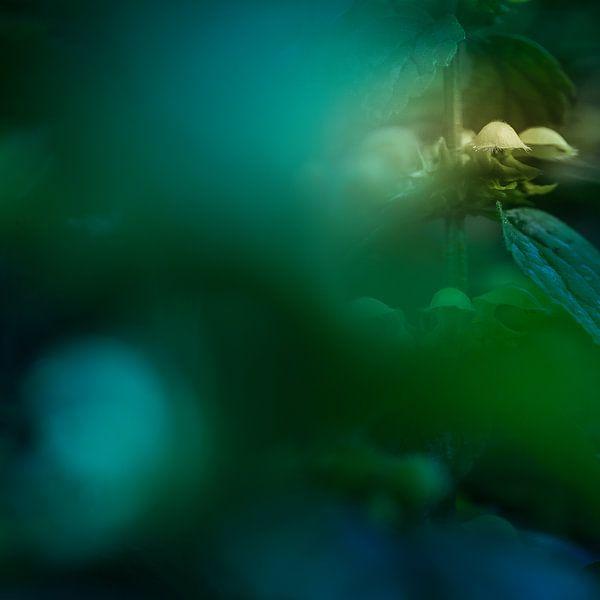 Mysterieuze gele Lamium I van Paul de Vos