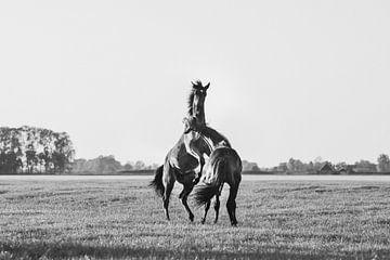 Spelende paarden steigeren in de wei in zwart wit van Maria-Maaike Dijkstra