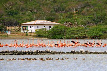 Flamingos von Bianca Arkesteijn