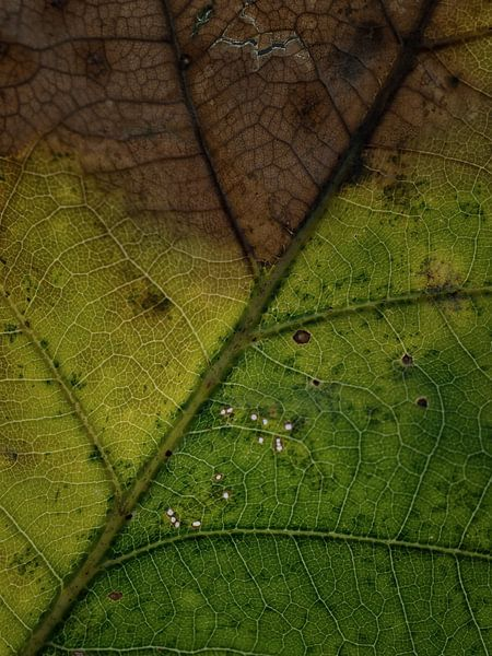 Not all the leaves are brown, yet... van Lex Schulte