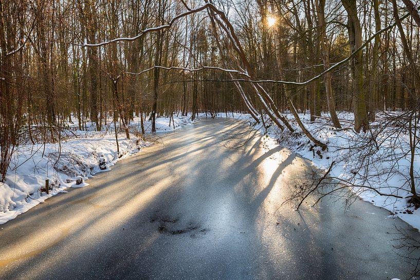 les rayons du soleil dans la forêt de Waterloop sur ChrisWillemsen