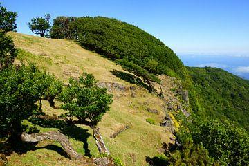 Madeira sur Michel van Kooten