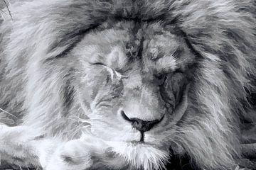 Schlaf gut Löwe von Michar Peppenster