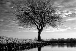 De kale boom aan de Lek van