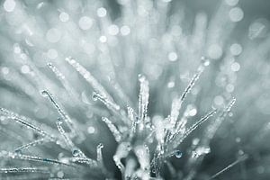 explosion of silver droplets