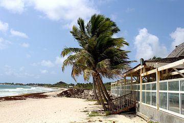 Palmbomen Orient Bay van Renske V