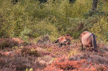 Prachtig paarden veulen von Nynke Nicolai