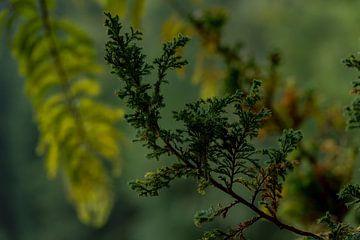 Conifer branch van Stefan Heesch