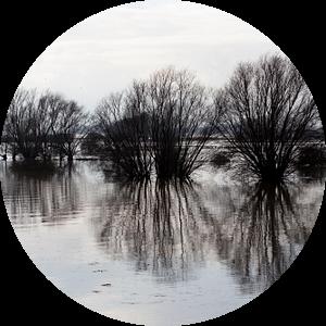 Hoge waterstand van de rivier de Waal van Kees van Dun