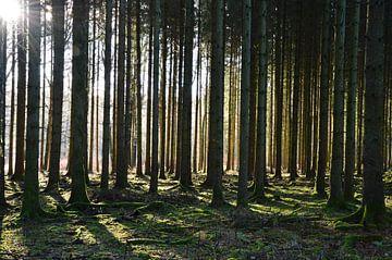 Bäume von Susanne Seidel