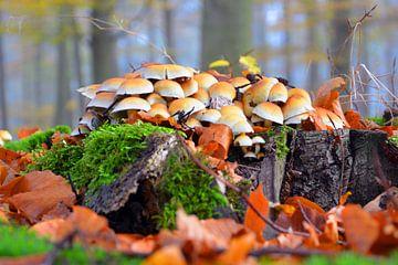 Herfst in de Achterhoek von Jaimy Buunk