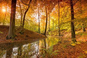 Bosven omringt door prachtige herfstkleuren van