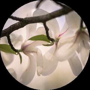 Tak van de magnolia van tim eshuis