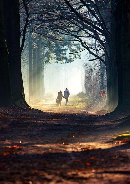 Bos wandeling van Frans Deeders