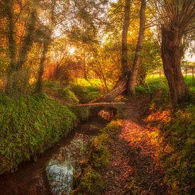 Herfstkleuren in Simpelveld van John Kreukniet