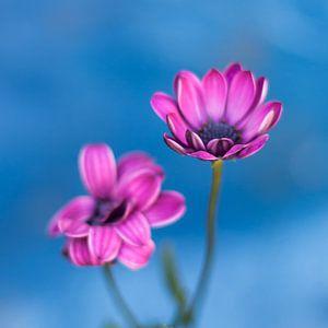 Flower (4)