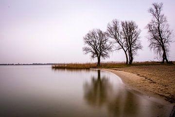 3 bomen van Matthijs Dijk