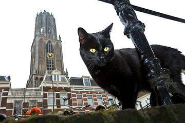 Poes met Domtoren, Utrecht sur Robert van Willigenburg