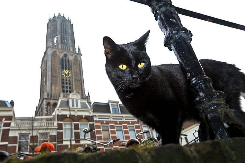 Poes met Domtoren, Utrecht van Robert van Willigenburg