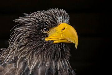 Angry bird von Karin Tebes