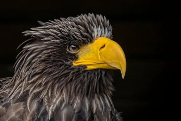 Angry bird van Karin Tebes