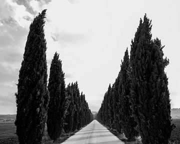 Cypressenlaan Cypress lane Corsia di cipressi van Sense Photography