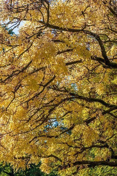Gele boom van Wim Slootweg