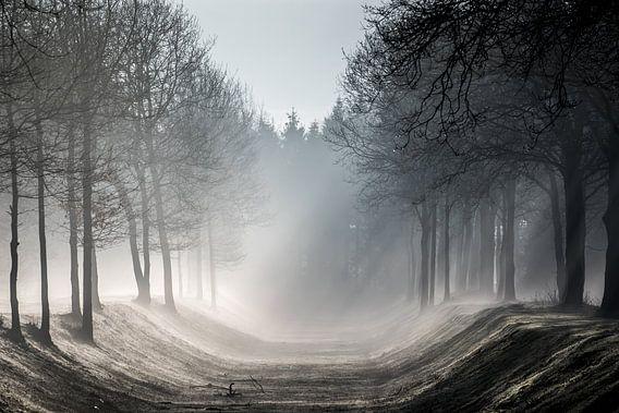 Misty Morning van Linda Raaphorst
