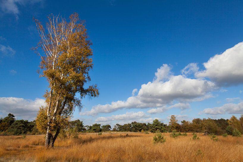 Landschap Maasduinen van DuFrank Images
