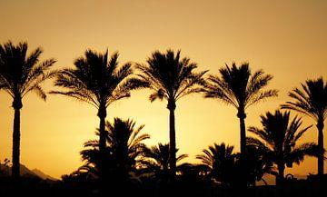 Palmbomen van Els Steutel