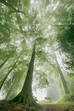 Bankje onder beuken bomen
