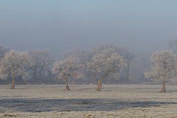 into the mist van Gaby Aukema