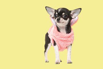Chihuahua puppy von Elles Rijsdijk