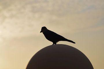 Silhouette eines Vogels van Heiko Obermair