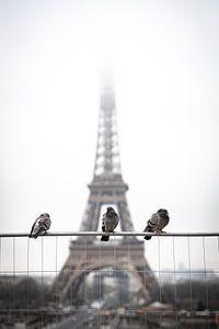 Vogels voor de Eiffeltoren. van Jordi Sloots