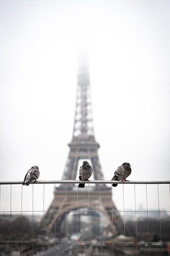 Vogels voor de Eiffeltoren.