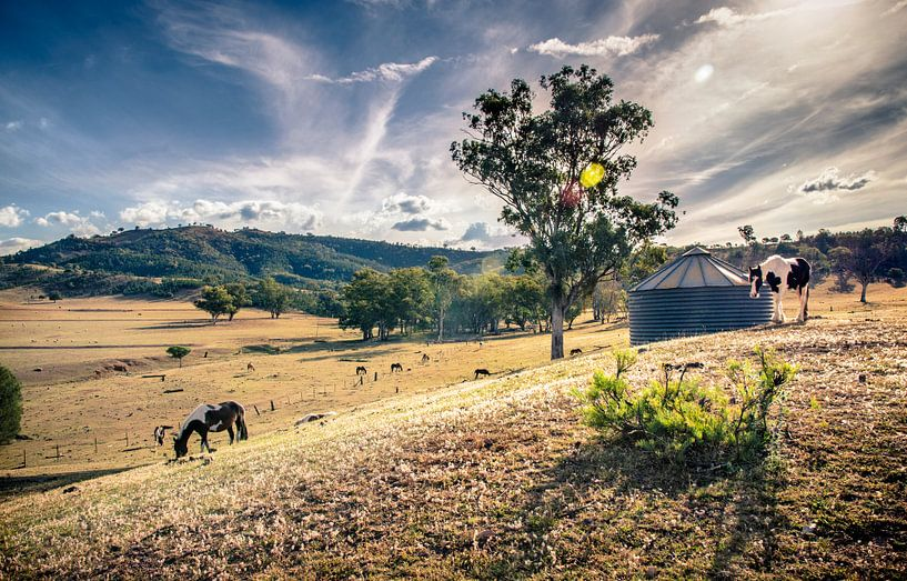 Australische Paarden Boerderij vlakbij Bingara van Sven Wildschut
