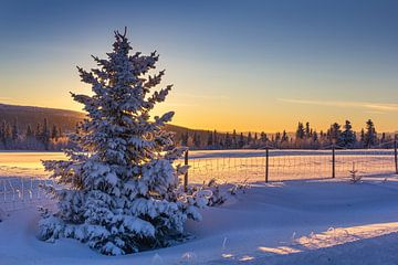 Winterabend in Norwegen von Adelheid Smitt