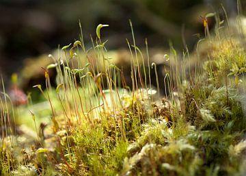 Mossen macrofoto von Ina Hölzel
