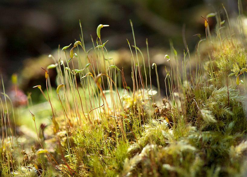 Mossen macrofoto van Ina Hölzel