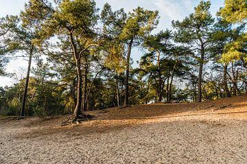 Loonse und Drunense Dünen in Herbsttönen von Ruud Morijn