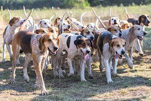 De jachthonden van
