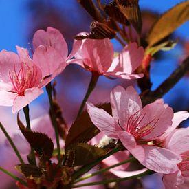 Prachtige fruitbomen in het voorjaar van Jolanta Mayerberg