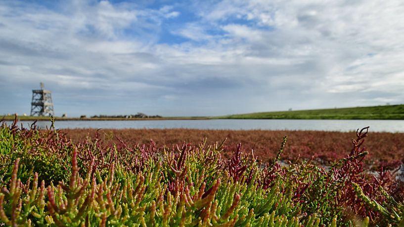 Le samphire des marais en Zélande sur Zeeland op Foto