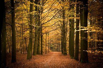 bos in de herfst van Marloes Hoekema