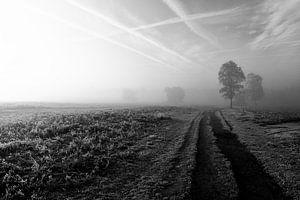 Mysterieuze mistige morgen van Vincent van Wijk