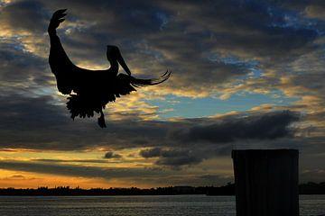 vliegende pelikaan. van Tilly Meijer
