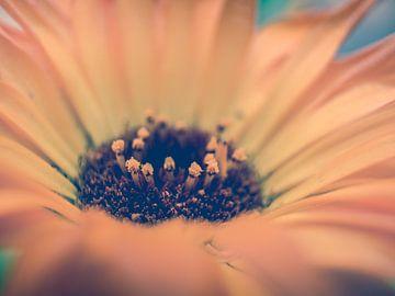 Gelb/Orange Blume Nahaufnahme Makrofotografie von Art By Dominic